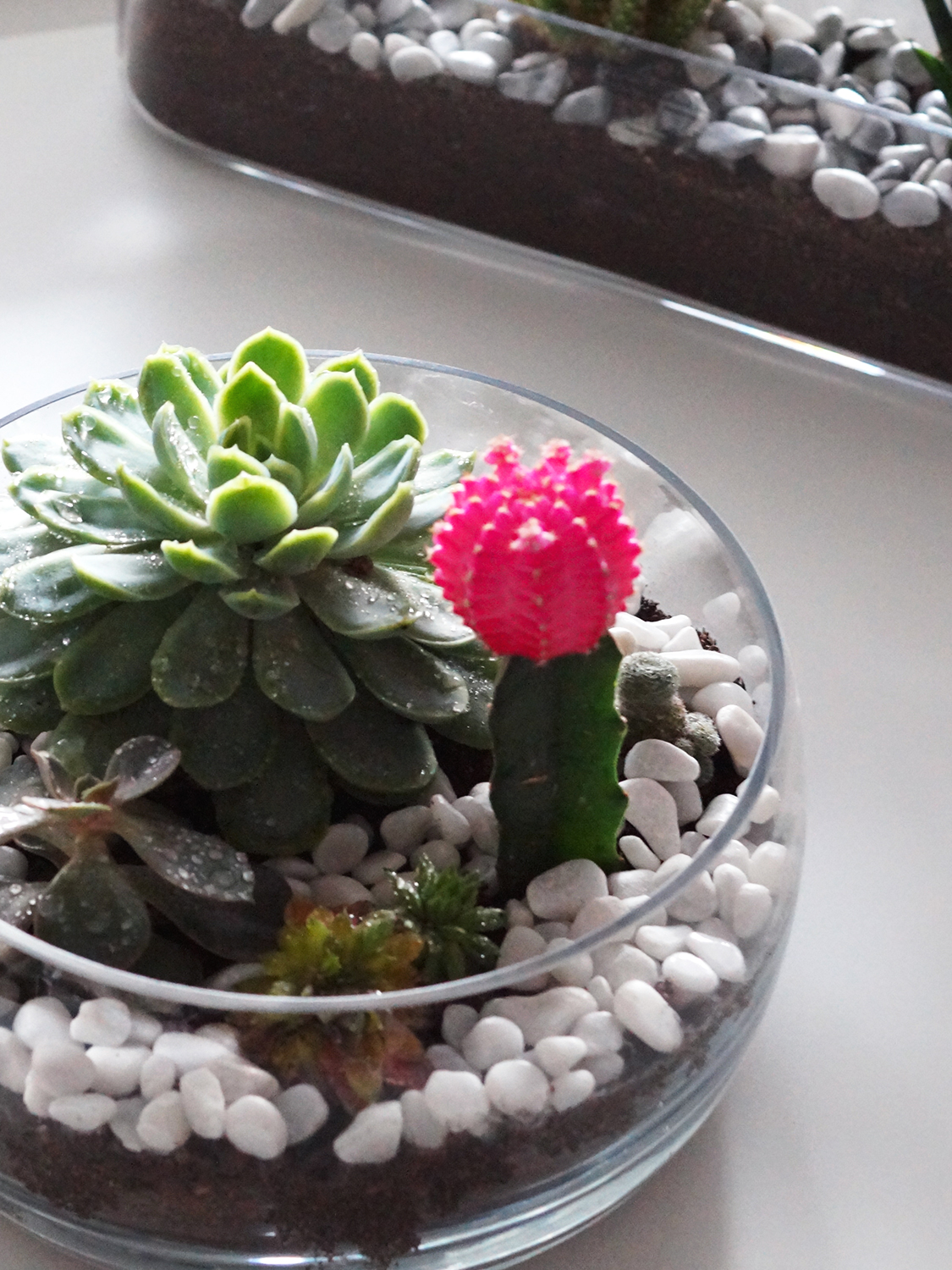 How to make your own Cactus & Succulent Terrarium